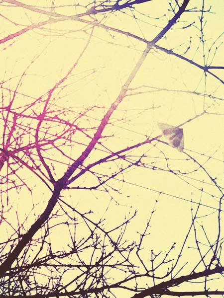 Photograph - Abstract Landscape Tree Art Fragile World 2 by Itsonlythemoon