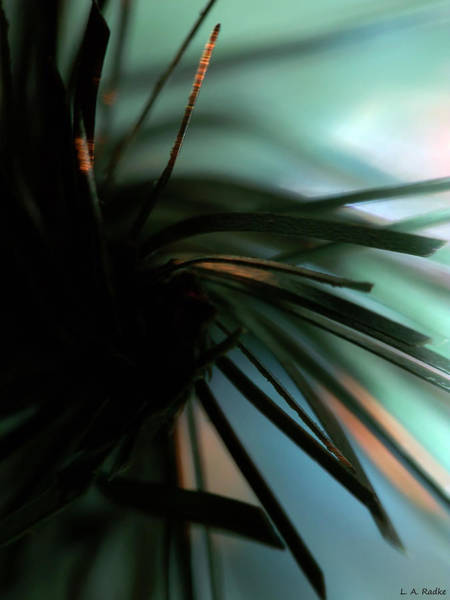 Photograph - Abstract by Lauren Radke