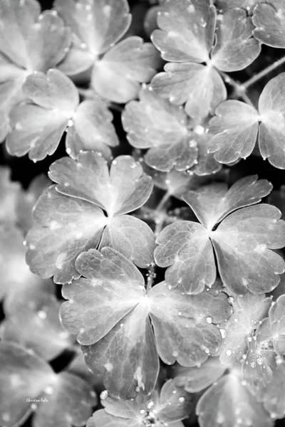 Photograph - Abstract Leaves Black And White by Christina Rollo