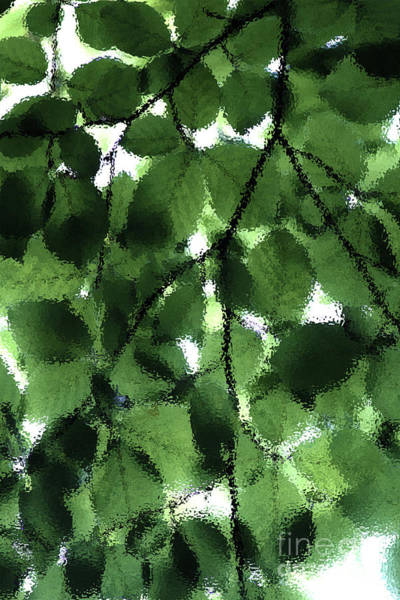 Photograph - Abstract Leaves by Doc Braham
