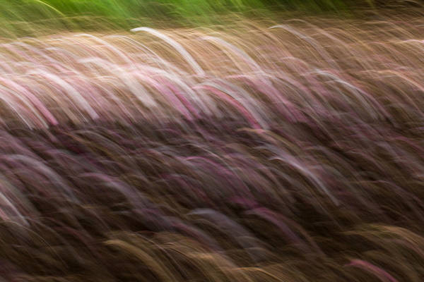 Photograph - Abstract Magnolias 2 by Clare Bambers