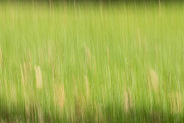 Photograph - Abstract Meadow by Clare Bambers