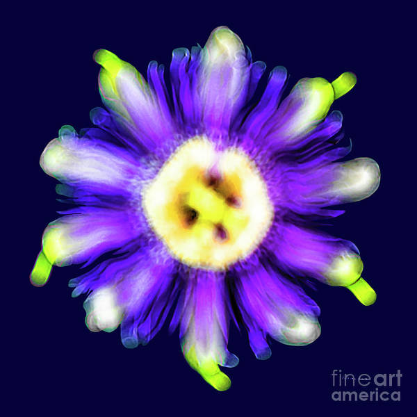 Photograph - Abstract Passion Flower In Violet Blue And Green 002b by Ricardos Creations