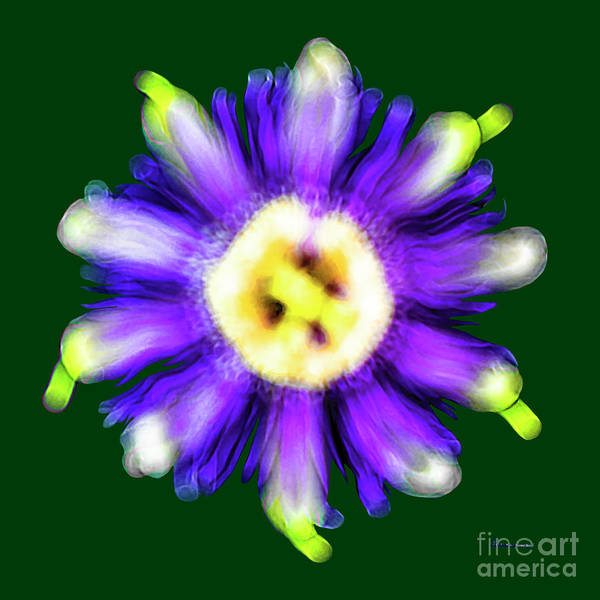 Photograph - Abstract Passion Flower In Violet Blue And Green 002g by Ricardos Creations