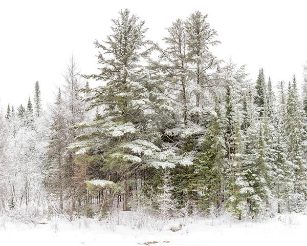 Photograph - Evergreen Winter by Rod Best