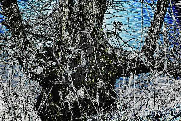 Photograph - Abstract Pond Tree by Gina O'Brien