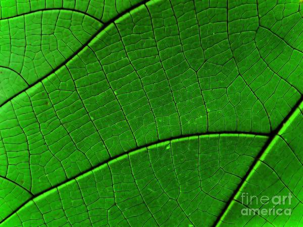 Aerial View Digital Art - Abstract Rain Forest by Yali Shi