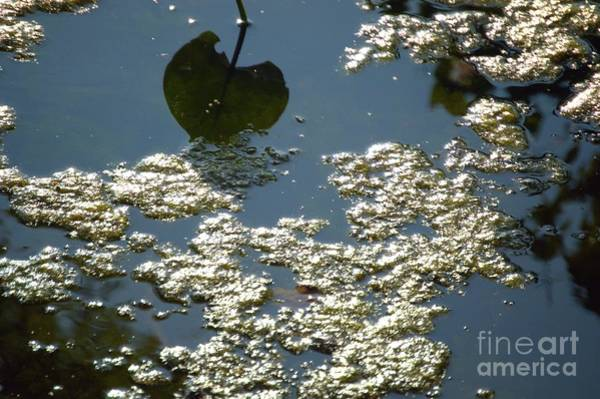 Photograph - Abstract Reflections  #6 - Nature Art by Robyn King