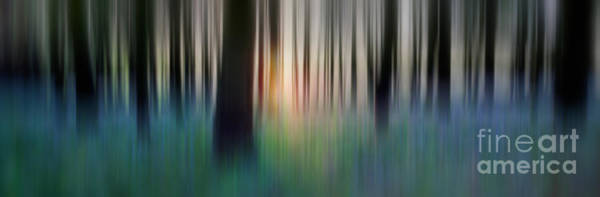 Wall Art - Photograph - Spring Forest by Rod McLean