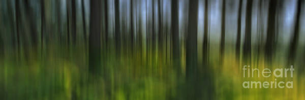Wall Art - Photograph - Summer Forest by Rod McLean