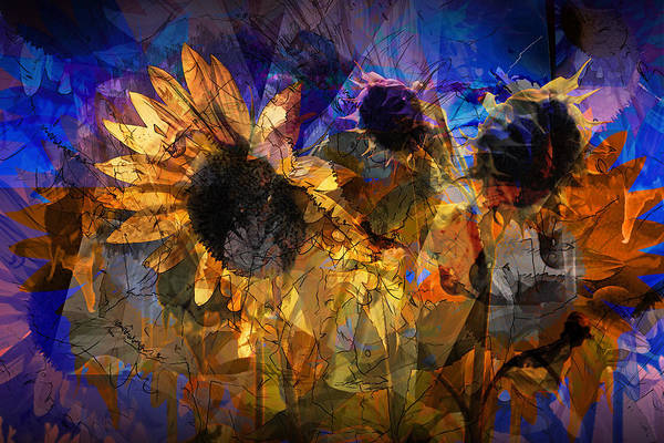 Photograph - Abstract Sunflowers by Randall Nyhof