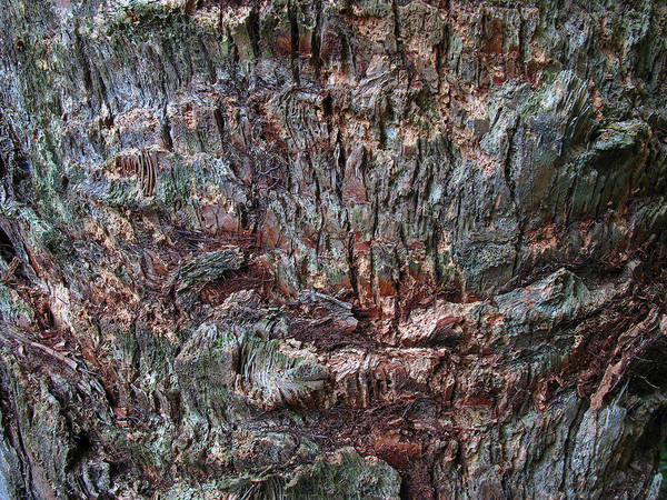 Photograph - Abstract Tree Bark by Juergen Roth