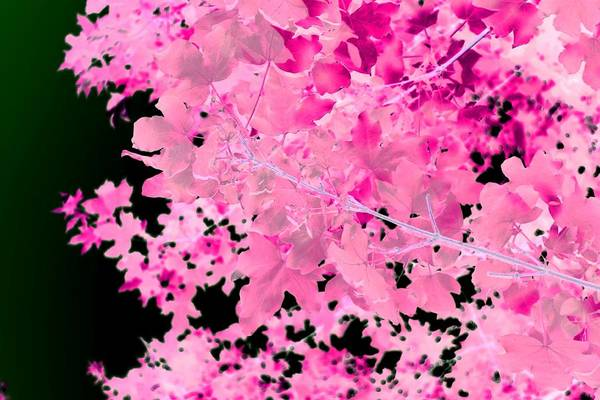 Photograph - Abstract Tree Landscape Dark Botanical Art, Green, Black And Pink by Itsonlythemoon