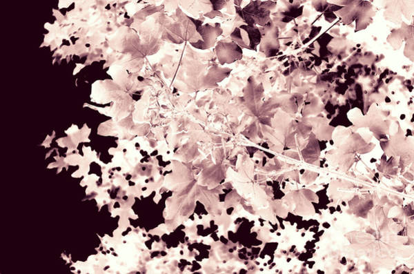 Photograph - Abstract Tree Landscape Dark Botanical Art Rose Tinted by Itsonlythemoon