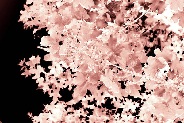 Photograph - Abstract Tree Landscape Dark Botanical Art Sepia 2 by Itsonlythemoon