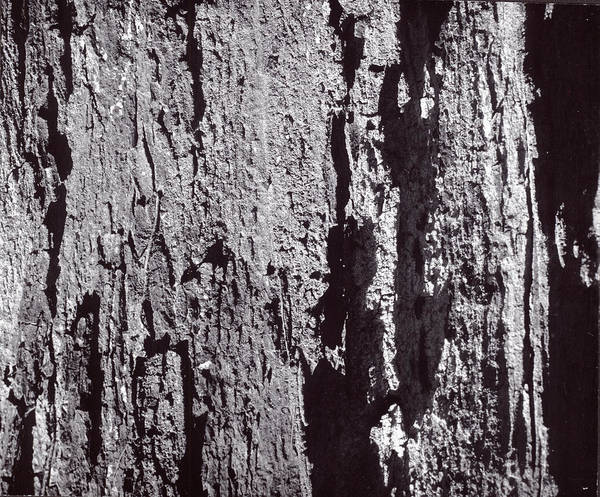 Abstract Treebark Art Print