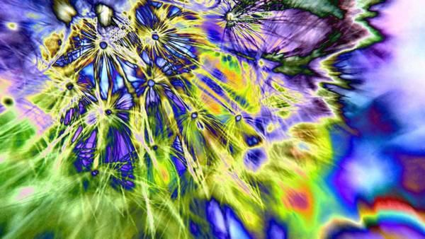 Digital Art - Abstract Wildflower 5 by Belinda Cox
