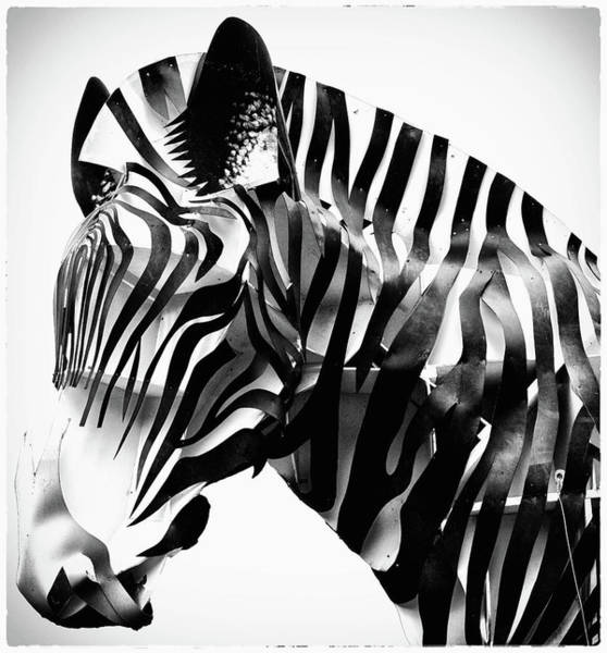 Zebra Pattern Photograph - Abstract Zebra by Martin Newman