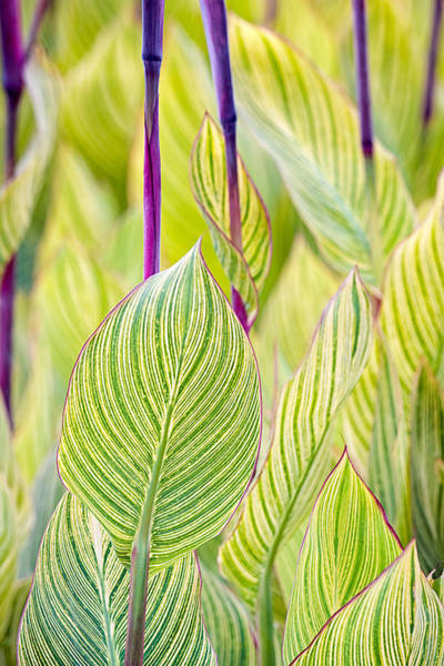 Wall Art - Photograph - Abstracts In Nature by Jeff Abrahamson