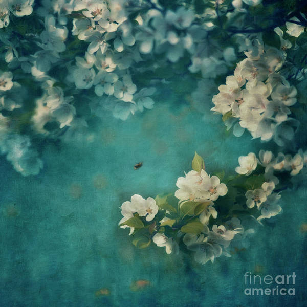 Wall Art - Photograph - Abundance  by Priska Wettstein
