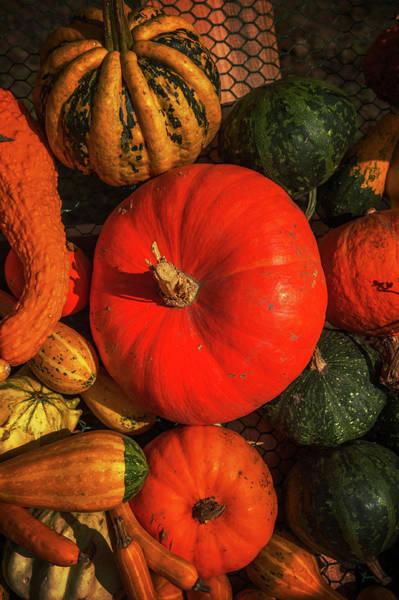 Cucurbitaceae Photograph - Abundant Autumn Harvest 1 by Jenny Rainbow