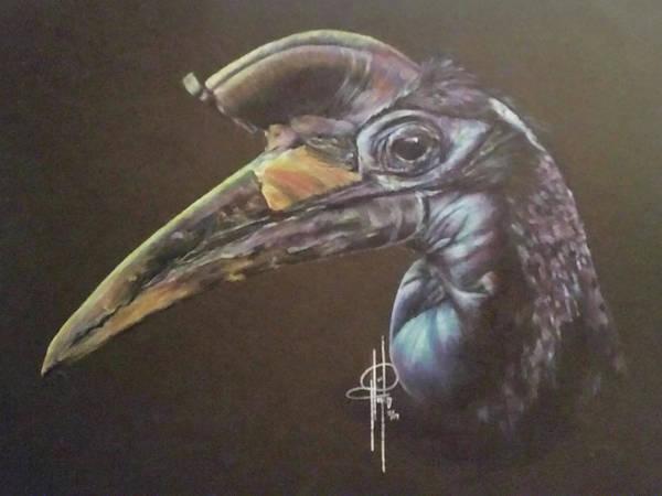 Hornbill Drawing - Abyssinian Hornbill by Tami Hughes