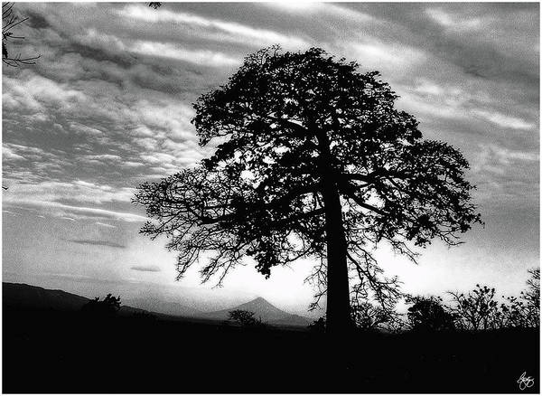 Photograph - Acacia And Volcano Silhouetted by Wayne King