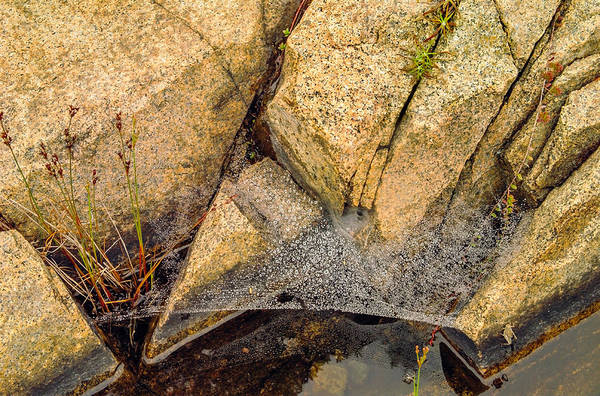 Spiderweb Digital Art - Acadia Granite With Spiderweb And Grasshopper Photo by Peter J Sucy