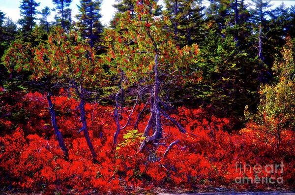 Photograph - Acadia National Park, Mountain, Trail, Head,maine by Tom Jelen