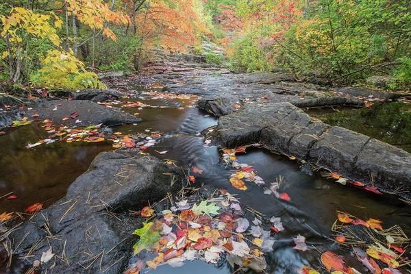 Photograph - Acadia Stream by Paul Schultz