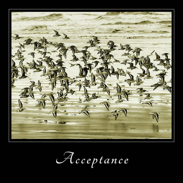 Photograph - Acceptance 2 by Mary Jo Allen