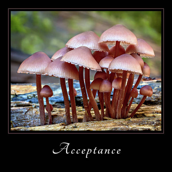 Photograph - Acceptance 4 by Mary Jo Allen