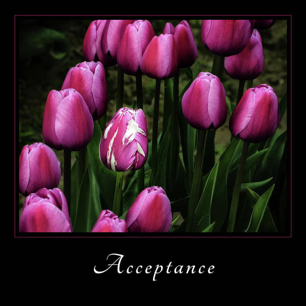Photograph - Acceptance 5 by Mary Jo Allen