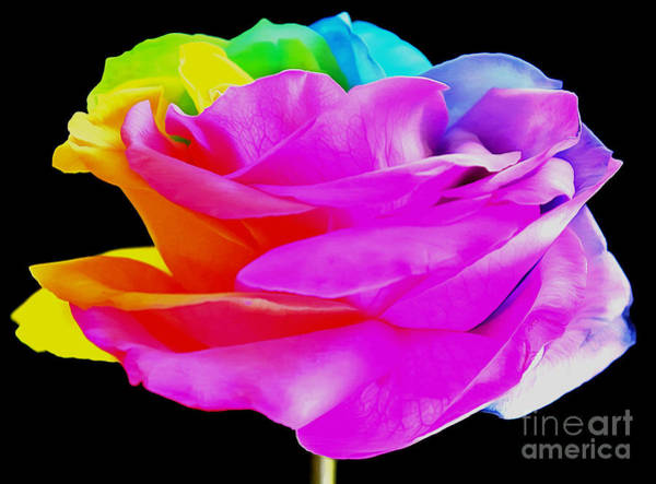 Rainbow Rose Wall Art - Photograph - Acceptance by Krissy Katsimbras