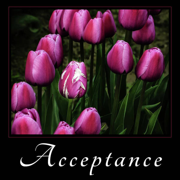 Photograph - Acceptance by Mary Jo Allen