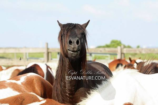 Photograph - Ace Says Hello With Fly by Captain Debbie Ritter