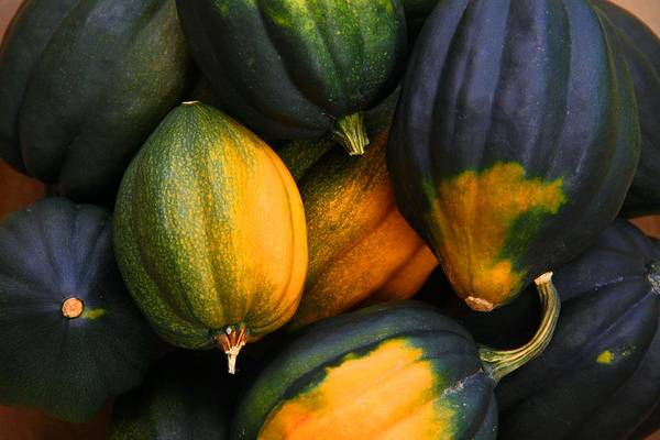 Acorn Squash Photograph - Acorn Squashes by Kathryn Meyer