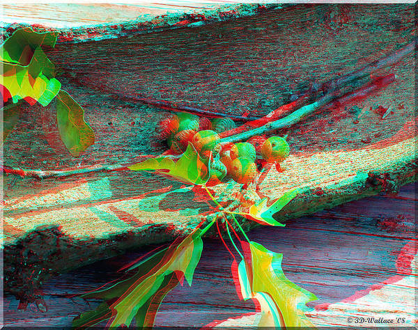 Anaglyph Photograph - Acorns And Bark - Use Red-cyan 3d Glasses by Brian Wallace