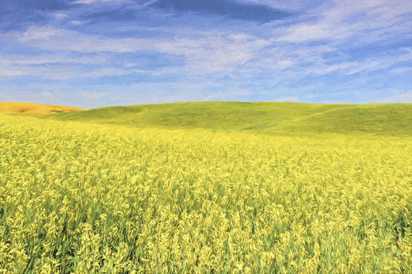 Agriculture Digital Art - Acreage Of Yellow II by Jon Glaser
