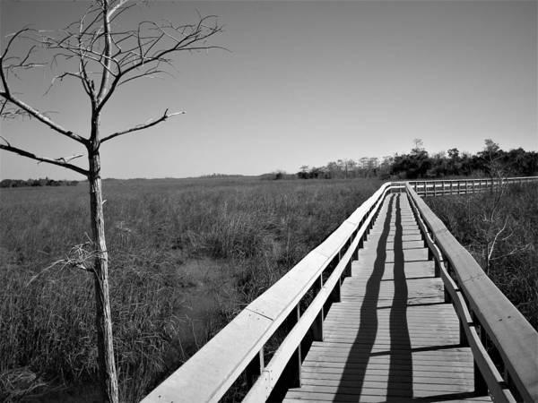 Photograph - Across The Swamp by Ken Bradford