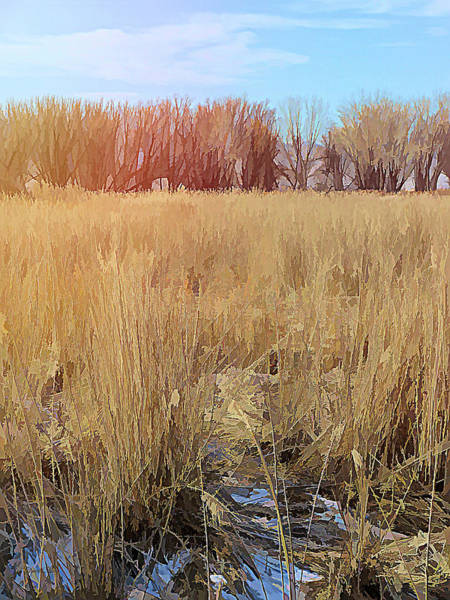Digital Art - Across The Winter Marsh by David King