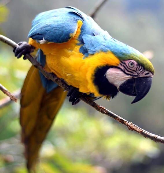 Brillante Photograph - Action Parrot by HQ Photo
