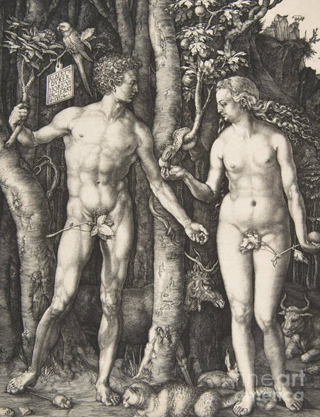 The Creation Of Adam Wall Art - Drawing - Adam And Eve, 1504  by Albrecht Durer