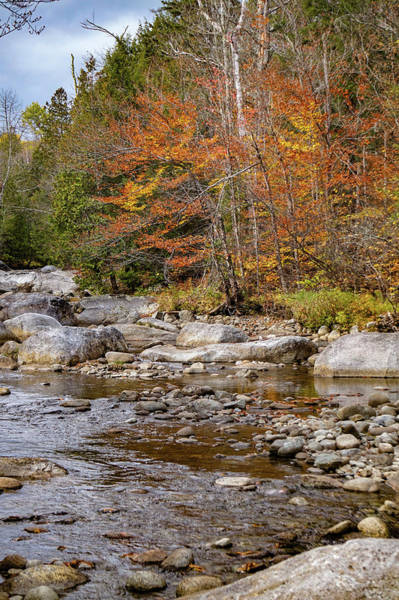 Photograph - Adirondack Streaming by Kendall McKernon