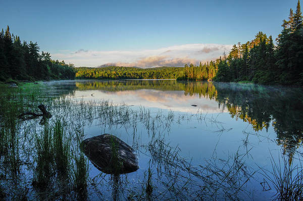 Photograph - Adirondack Wild by Bob Grabowski