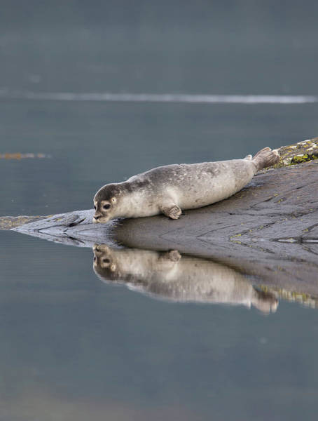 Photograph - Admiring Its Reflection by Peter Walkden
