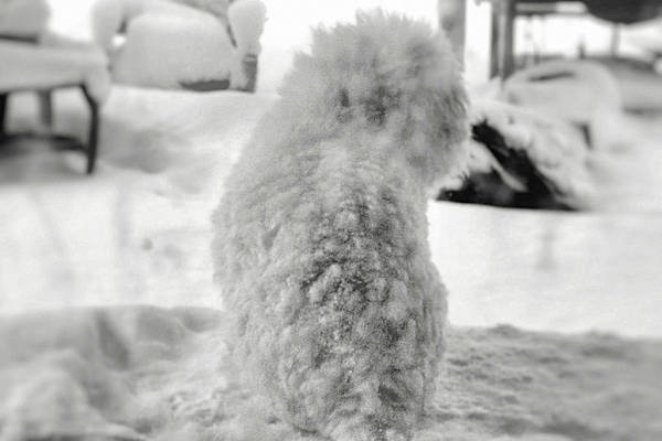 Photograph - Adorable Snow Monster by Susan Maxwell Schmidt