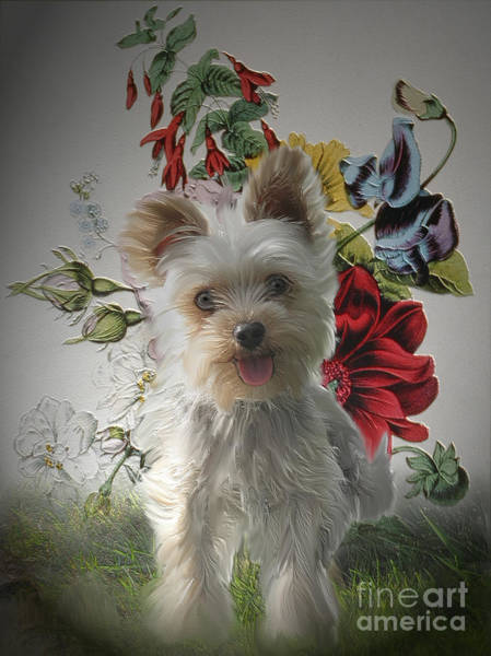 Yorkie Wall Art - Painting - Adorable Yorkie And Rose Photo Painting by Heinz G Mielke
