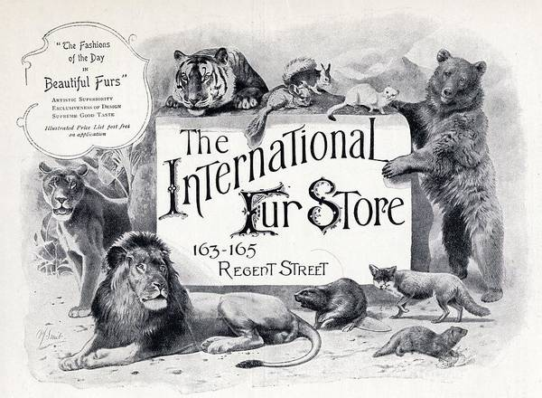 White Tiger Drawing - Advertisement For The International Fur by Vintage Design Pics