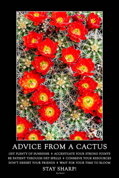 Photograph - Advice From A Cactus by Teri Virbickis
